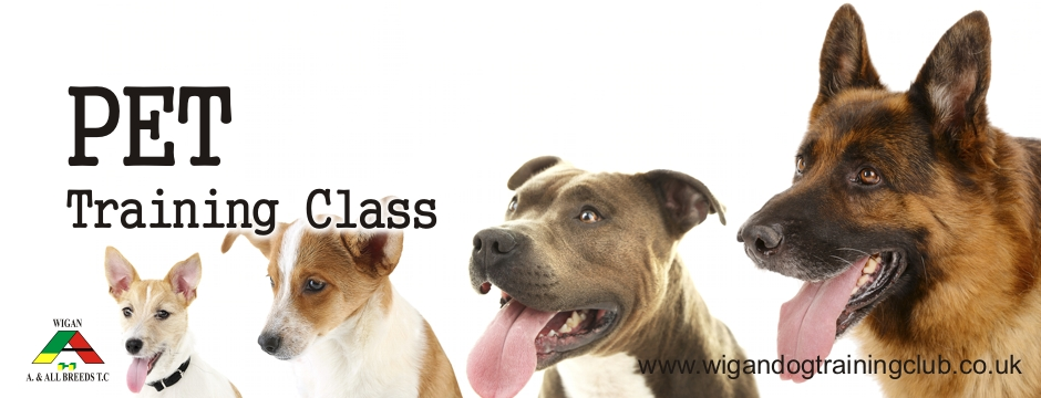Pet Training Class